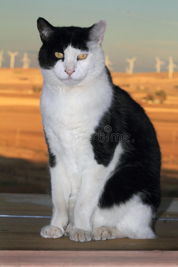 The Regal Tuxedo royalty free stock photo