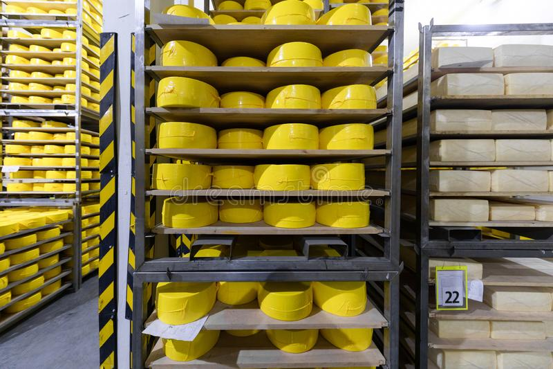 Regale mit Käse an einem Käselager Abschluss oben lizenzfreies stockbild