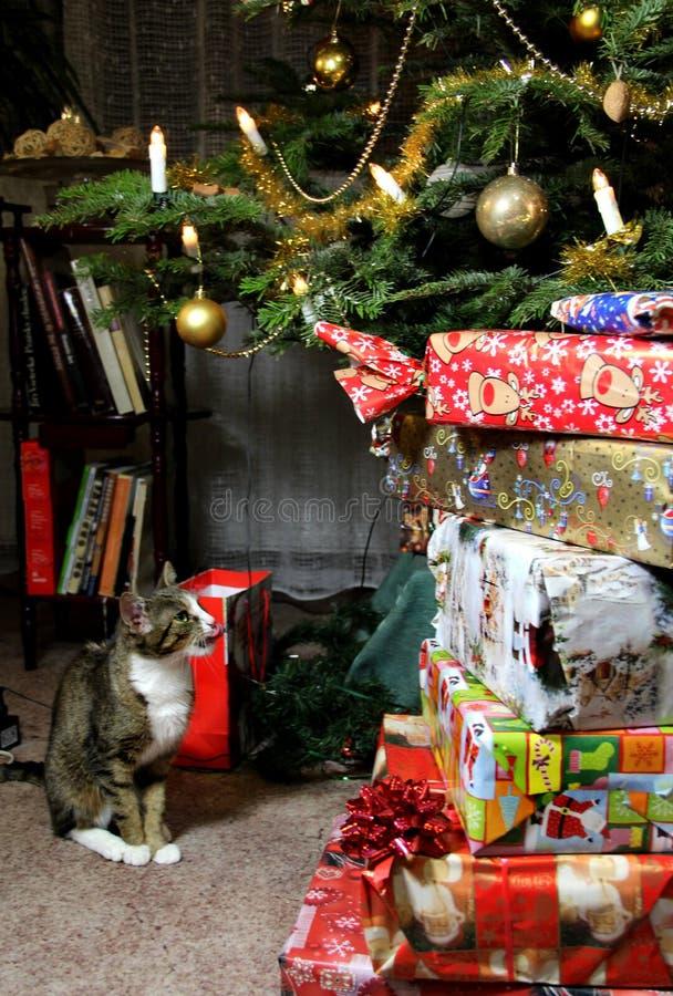Regali di Natale e gatto divertente fotografie stock