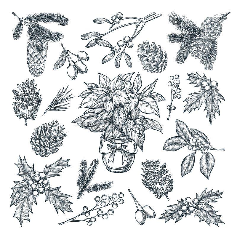 Regalo del Año Nuevo, de la Navidad y decoración de la tarjeta de felicitación Planes y flores de las vacaciones de invierno Ejem stock de ilustración
