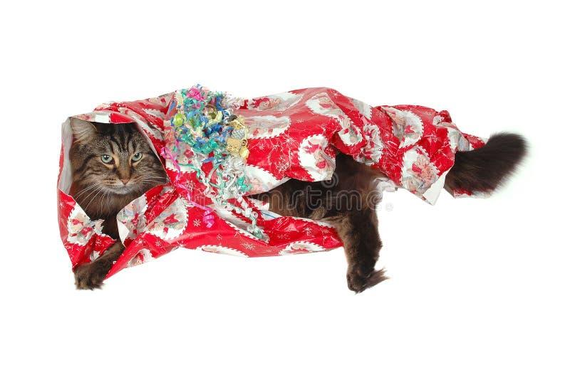 Regalo del gato de Navidad foto de archivo