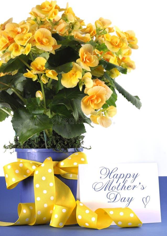 Regalo en conserva de la planta de madres de la begonia amarilla hermosa feliz del día con las flores amarillas imagen de archivo