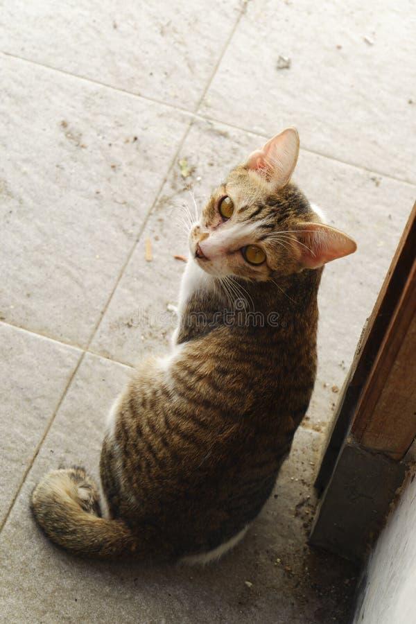 regard arrière de chat photos stock