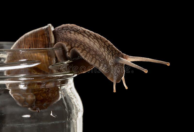Regard curieux d'escargot photographie stock libre de droits