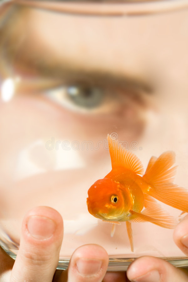 Regard dans la cuvette de Goldfish images stock