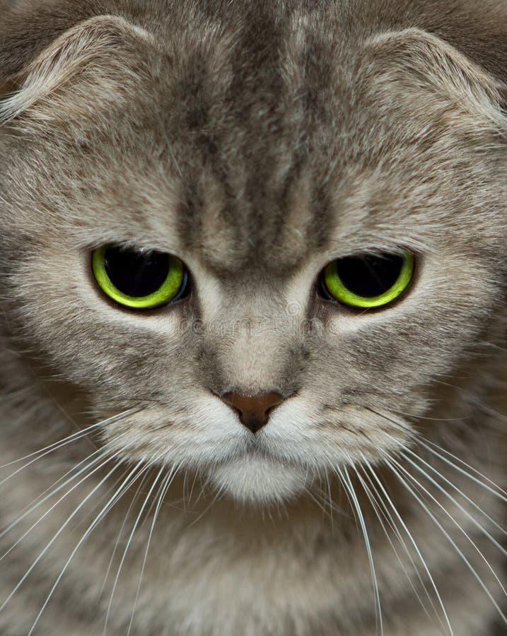 Regard de chats photos libres de droits