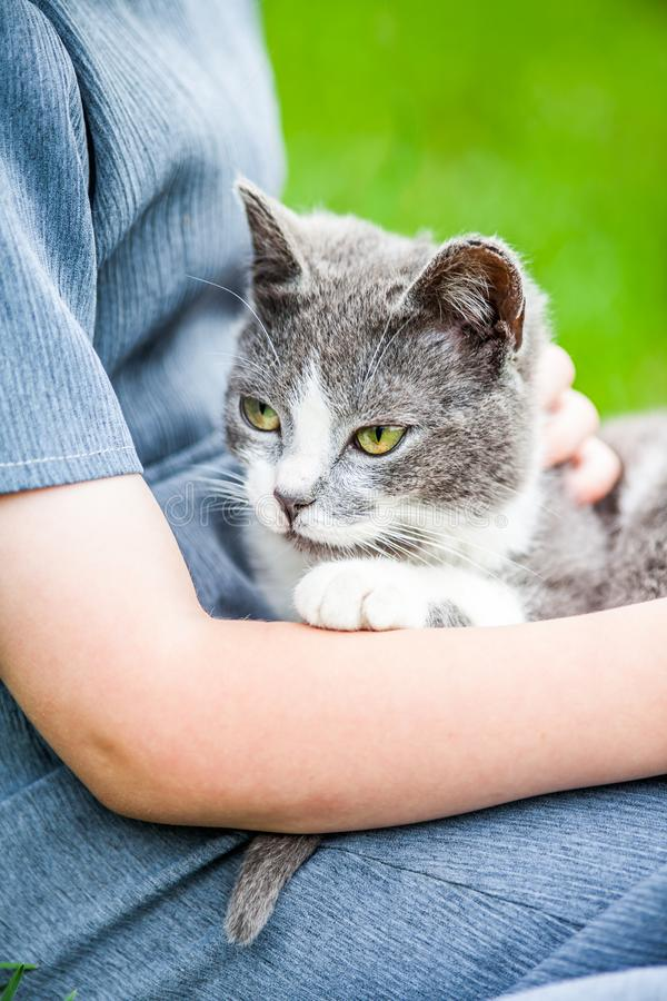 regard de fixation de fille de chat d'appareil-photo images stock