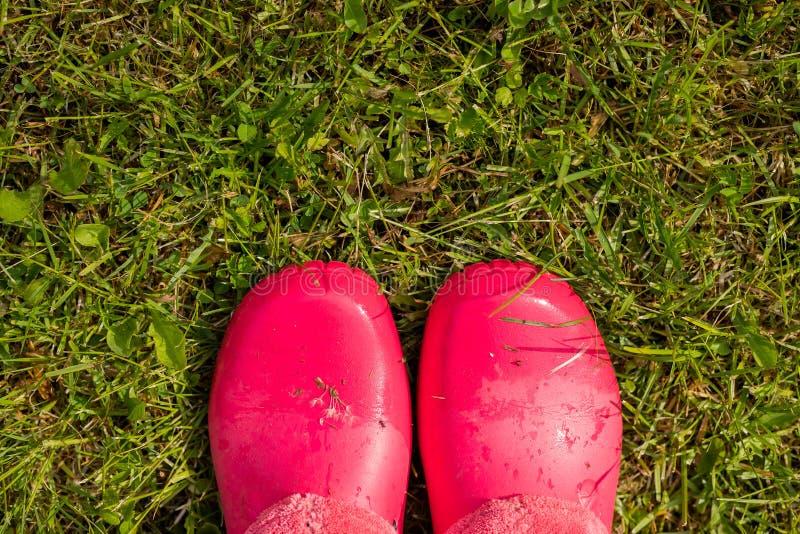 Regard en bas des chaussures roses de couleur en caoutchouc sur l'herbe femme dans des bottes en caoutchouc marchant sous la plui photo libre de droits
