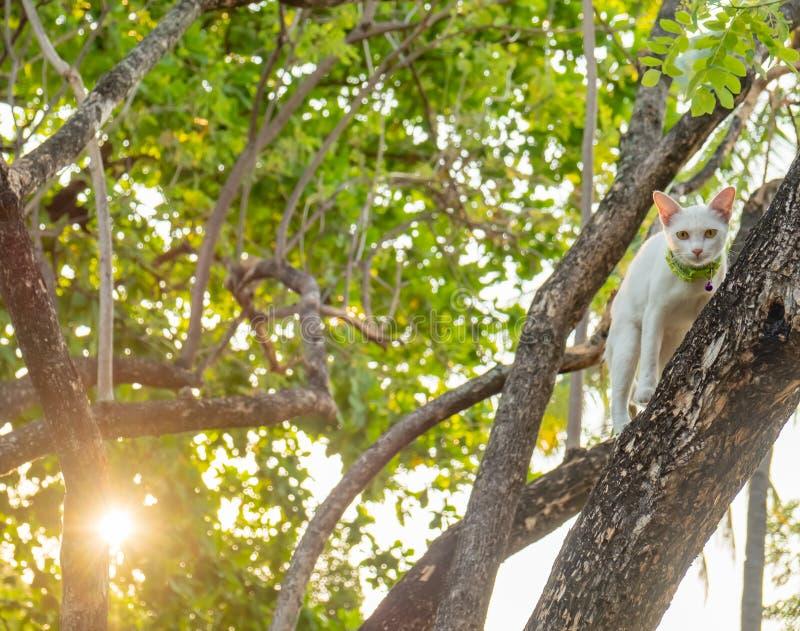 Regard fixe blanc vilain de chat directement dans le doute images libres de droits