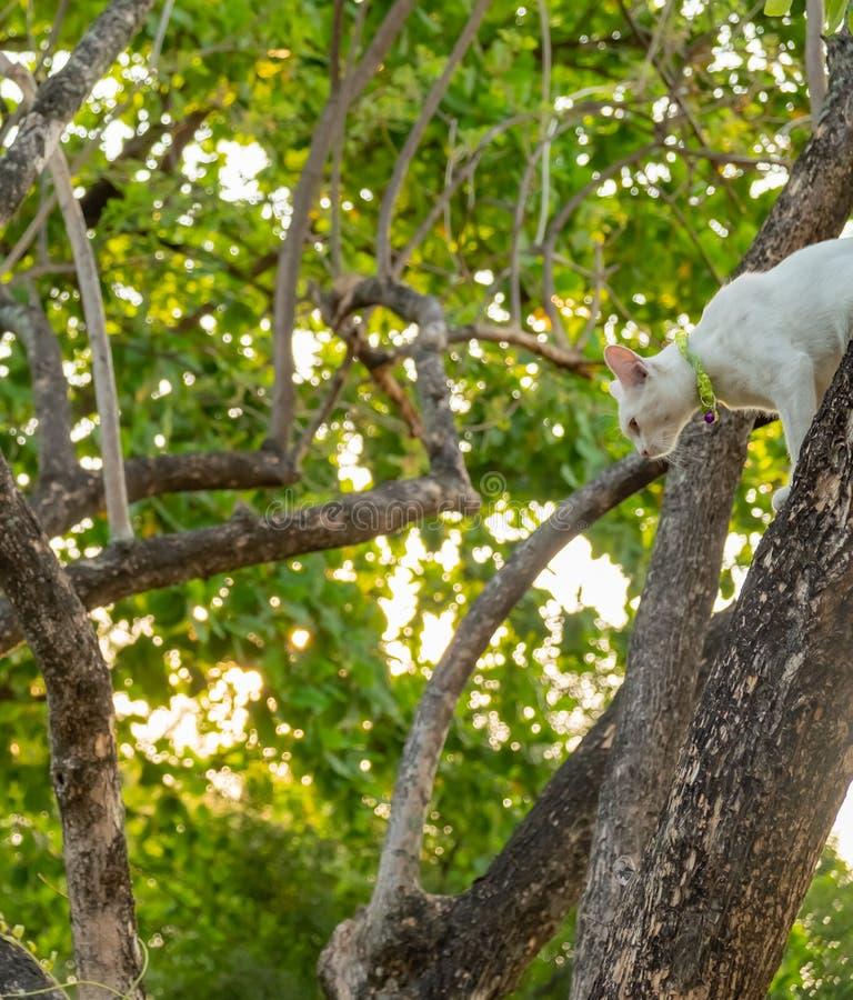 Regard fixe blanc vilain de chat ? quelque chose image stock
