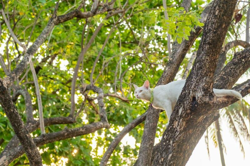 Regard fixe blanc vilain de chat ? quelque chose photo libre de droits