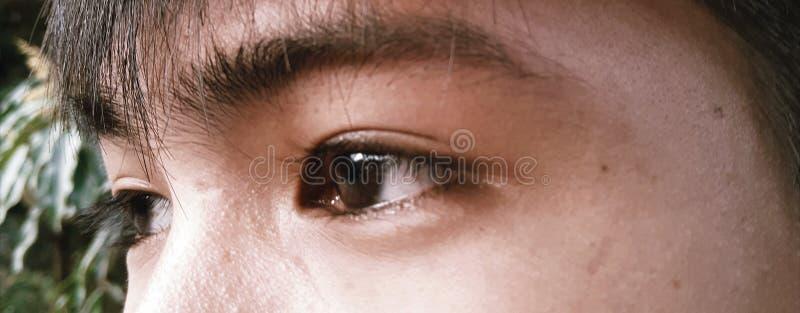 Regard fixe froid avec les yeux bruns purs photographie stock libre de droits