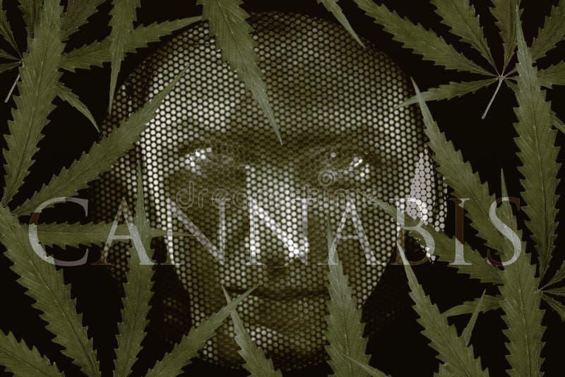 Regard humain par des grilles et des feuilles de cannabis image stock