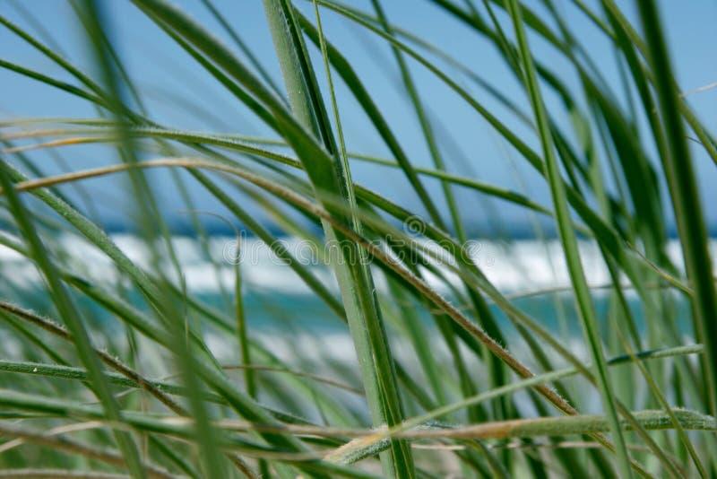 Regard par l'herbe photo libre de droits