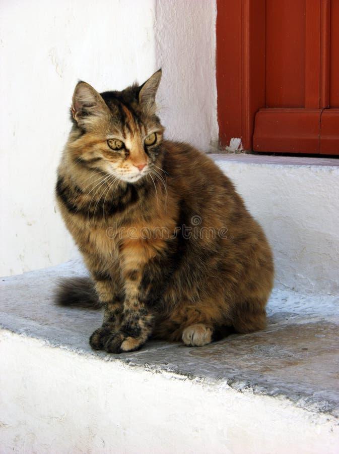 Regard triste de jeune chaton à cheveux longs bringé devant la porte brune de maison images stock