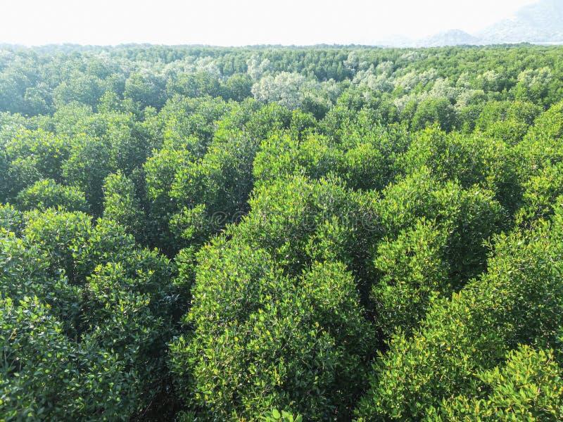 Regard tropical profond de palétuvier de forêt tropicale d'arbre vert en bas de vue aérienne photos stock