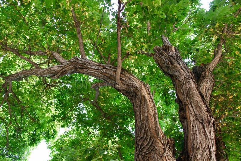 Regarder des branches d'arbre image stock