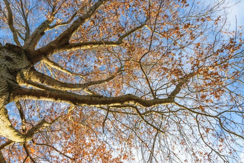 Regarder le coucher du soleil de befire de chêne de force images stock