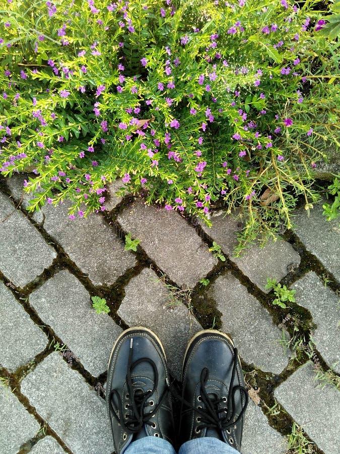 Regarder le grassflower photographie stock