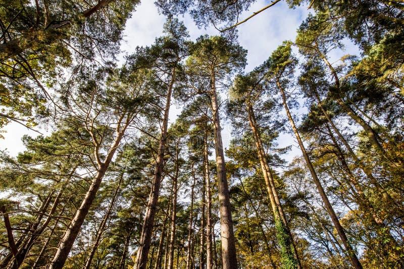 Regarder les dessus d'arbre et le ciel bleu au-delà photo stock