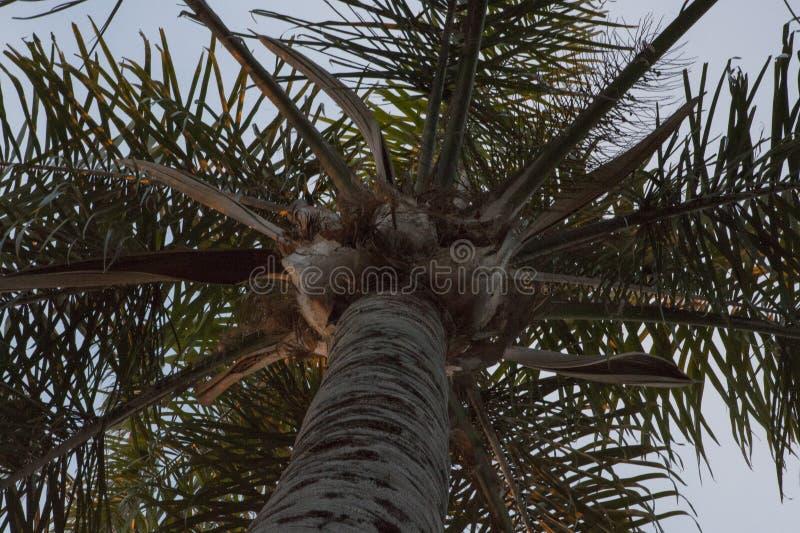 Regarder un dessus de palmier images stock