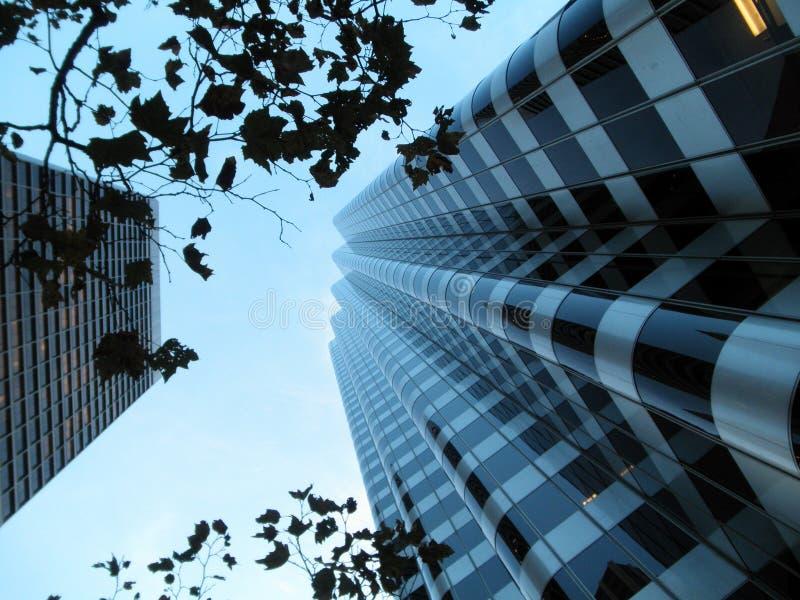 Regarder vers le haut par des branchements les constructions modernes image stock
