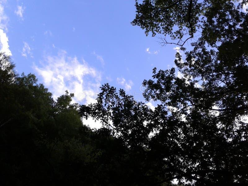 Regardez au ciel photos libres de droits