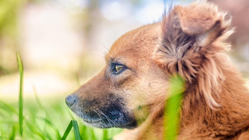 Regardez d'un chien dans le domaine image libre de droits