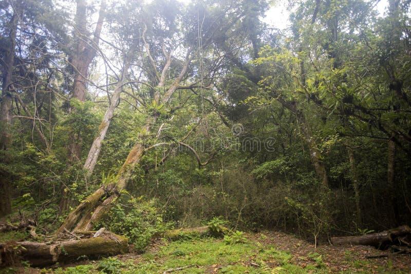 Regardez la forêt tropicale originale, Amber Mountain, Madagascar photo libre de droits