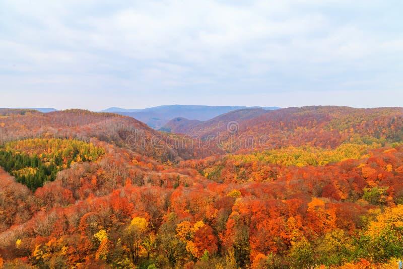 Regardez la montagne de la gorge de Jogakura dans la saison d'automne, Aomori, Japon photos libres de droits
