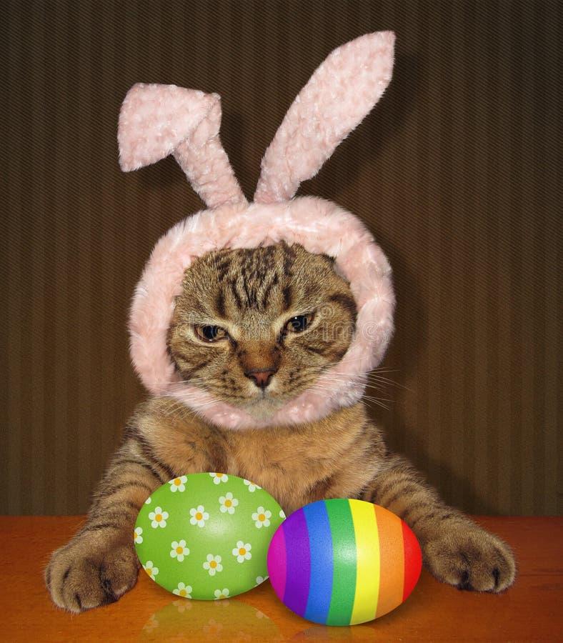 Regards fixes de chat aux oeufs de pâques images libres de droits