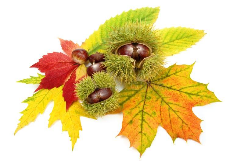 Regeling met de herfstbladeren en kastanjes stock afbeelding
