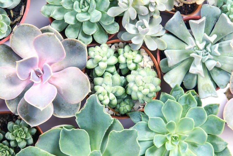 Regeling van succulents of cactus succulents stock afbeeldingen