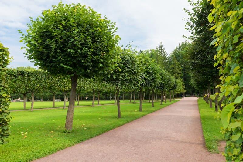 Regelmäßiger Park stockbild