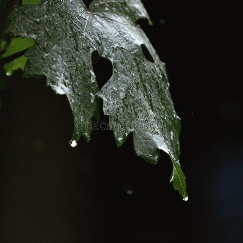 Regen stockbild