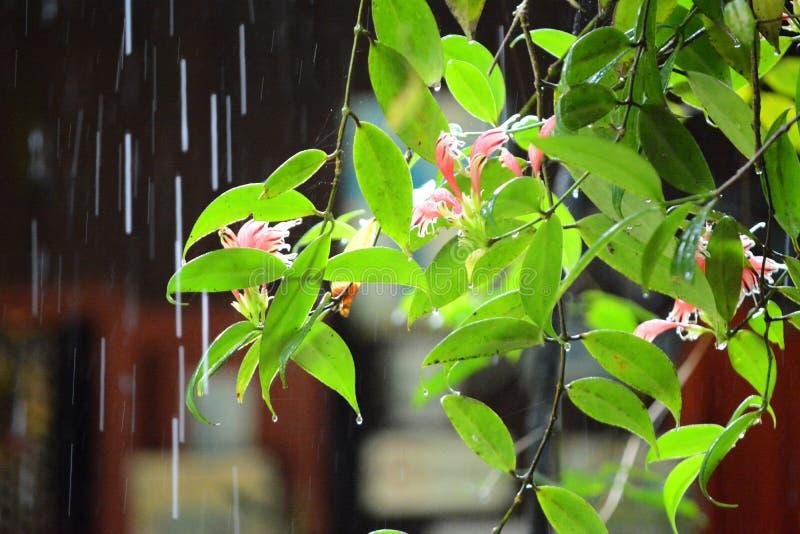 Regen auf Blättern stockfotografie