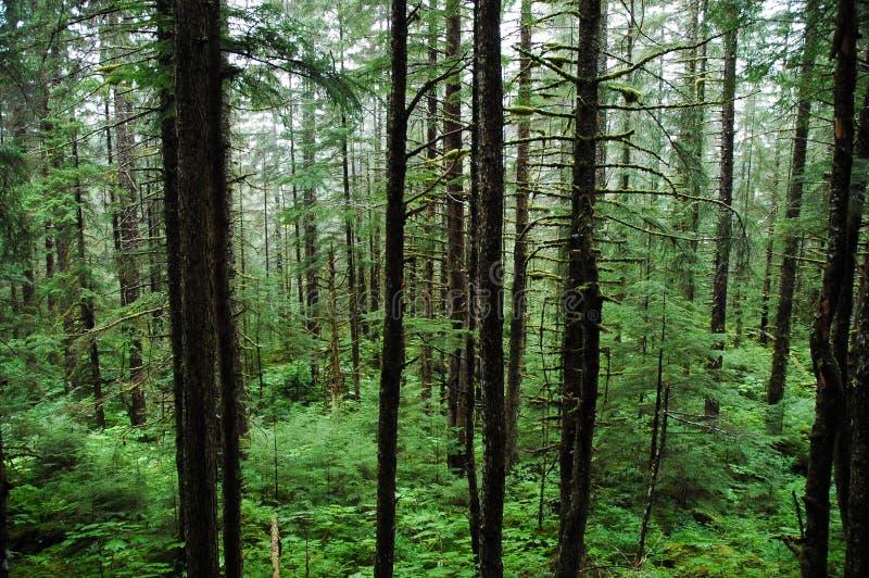 Regen-Bäume des Waldes und Vegetation stockbild
