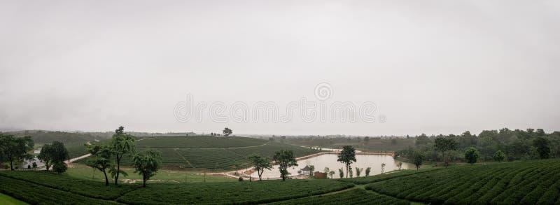 Regen bij theeaanplanting in de uitlopers royalty-vrije stock fotografie