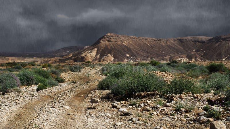 Regen in de Negev-Woestijn stock afbeeldingen