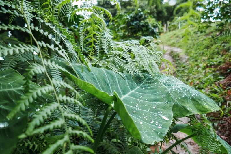 Regen in de wildernis, water op een blad royalty-vrije stock foto