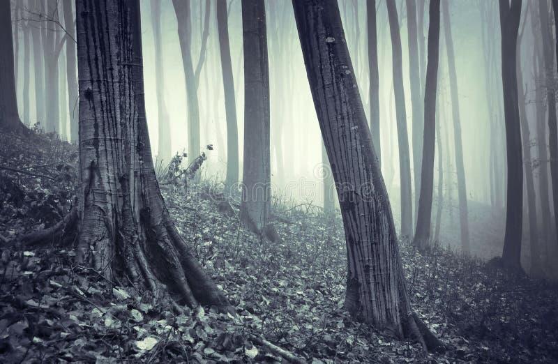 Regen die in een bos met mist druipt stock foto's