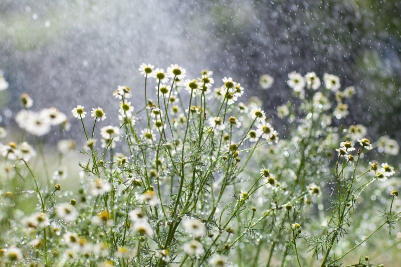 Regen en bloemen royalty-vrije stock afbeelding