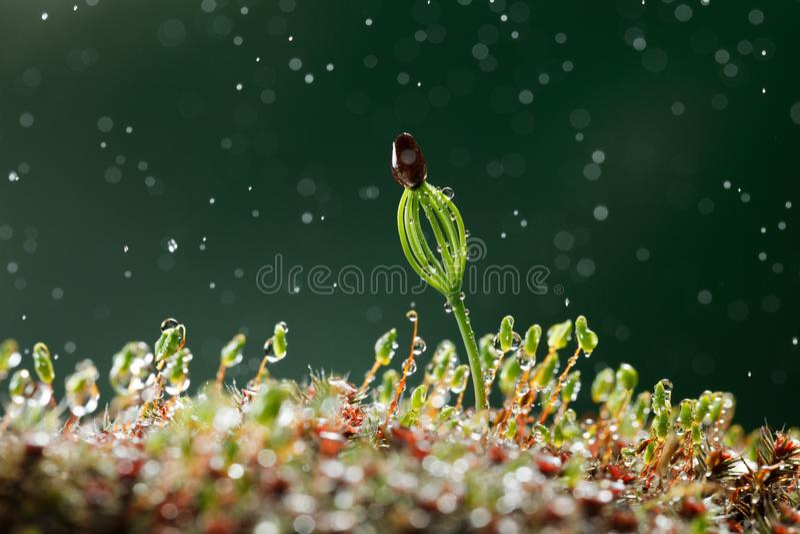 Regen en nieuw - geboren boom stock fotografie