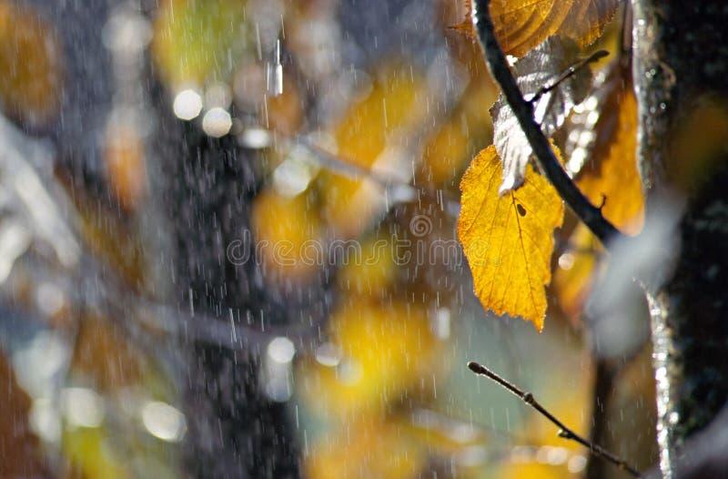 Regen en sneeuw over de herfstbladeren stock afbeelding
