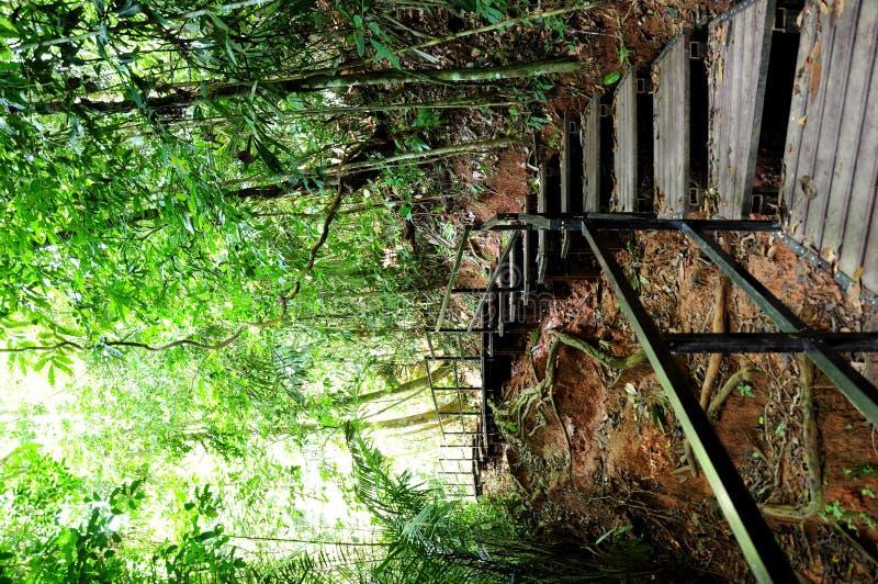 Regen Forest Waik Way royalty-vrije stock fotografie