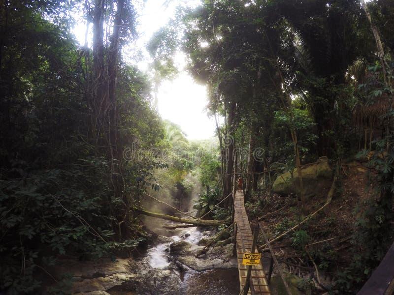 Regen Forrest stockfotos