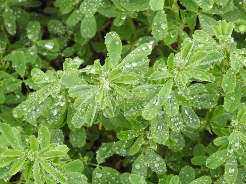 Regen Geparelde Schoonheid royalty-vrije stock fotografie