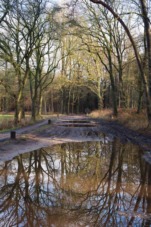 Download Regen in het bos stock foto. Afbeelding bestaande uit water - 29508788