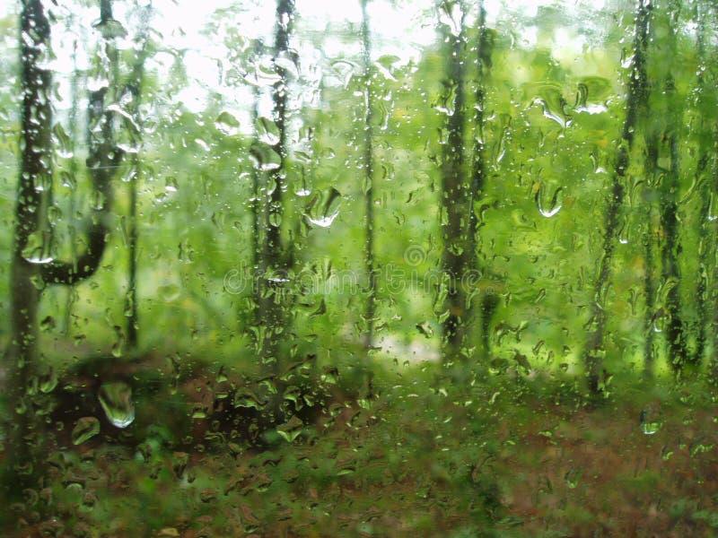 Regen in het bos royalty-vrije stock fotografie