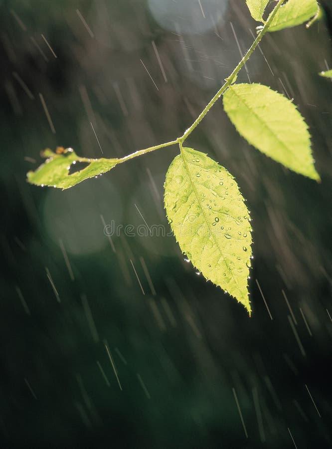 Regen met Bladeren stock fotografie